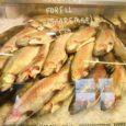 Kaubanduskettide korraldatavad sooduskampaaniad panevad keerulisse olukorda kohalikud kalakasvatajad, kes ei suuda seetõttu konkurentsis püsida. Eesti vesiviljelejate liidu juhatuse liige, Pöide vallas asuva kalakasvanduse OÜ AquaMyk omanik Priit Lulla ütles, et […]