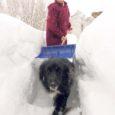 Kui pilk lumekaardile ( 30. dets SH) visata, siis on näha, et kõige paksema lumega on ilmataat Saaremaal tänavu õnnistanud Kaarma, Laimjala ja Pihtla valda, lumekatte paksuseks neis paigus oli siis märgitud 56–65 cm. Ent lund on tulnud veel ja veel ning iga päev puistab taevaluukidest lisa. Mis toimub? Kui linnas pole ju häda, saad tänu tublidele lumetõrjujatele suhteliselt hästi liikuda, siis kuidas elatakse maal? Mismoodi sealsed inimesed kooli, tööle, poodi saavad? Ja mis see kõik maksma läheb?
