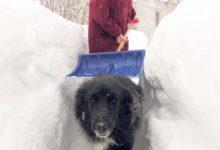 Lumi, lumi ja veel kord lumi