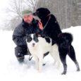 Selletalvised lumeolud on seadnud suuremasse ohtu ka jahikoerad, kes paksust lumest tingitud liikumisraskuste tõttu võivad metssea rünnaku korral kergemini viga saada.