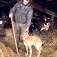 Vaatamata visalt levivatele kuulujuttudele tegevuse lõpetamise kohta üritab kaks nädalat tagasi aset leidnud laudapõlengus kümneid loomi kaotanud OÜ Koikla uuesti järje peale saada.