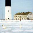 Viimase aja suur külm on rannikumere kõvasti kinni kaanetanud ning jätnud siia talvitama jäänud luiged seega vaba vee puuduse tõttu kehva seisu.
