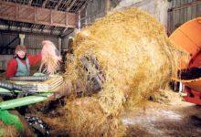 Piimatootja nõuab 5000 eurot ulukikahjuhüvitist