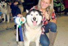 Alaska malamuut Hundu tunnistati Eesti tšempioniks