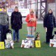 12. märtsil toimusid Tallinnas TAKO (Tarkade Koerte Klubi) talvekarika III etapi võistlused. Kohtunik oli Pirkko Bellaoui (Soome). Saaremaalt osales seekord neli võistkonda ja neist kõik jõudsid oma klassi esikolmikusse.
