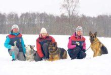 Koerteklubi Aktiiv võistles Winter Cup'il