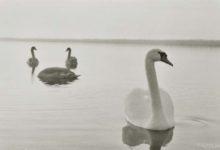 Kevad tõi linnud ja ornitoloogid taas Vilsandi rahvusparki