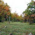 Saaremaal ja Muhus on inventeeritud üle 20 000 ha poollooduslikke kooslusi, millest hooldatakse püsivalt ligikaudu 7500 ha. Ülejäänud alad on võsastunud või roostunud ning neid ei ole enam võimalik kasutada […]