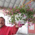 Nagu viimastel aastatel tavaks alustas ka sel kevadel Kuressaare turu omakasvatatud saaduste letil esimesena kauplemist Valjala lille-, kurgi- ja tomatikasvataja Jaan Aasel.
