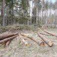Teisipäeval astub kohtu ette 26-aastane Elvis, keda süüdistatakse puude ja põõsaste ebaseaduslikus raies. Sama teo eest on ka Sikassaare Metsad OÜ-le esitatud süüdistus, et Lääne-Saare vallas ühel maaüksusel on tehtud […]