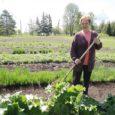 Muhulanna Merika Kumpas kasvatab juba kuuendat aastat Kuressaare tuntumatele restoranidele kõikvõimalikke maitse- ja salatitaimi.