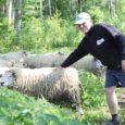 Pühapäeva hommikul nägi Valjalas vallas Lööne külas Lõve jõe äärsel karjamaal lammaste eest igapäevaselt hoolitsev Reigo Lõhmus maas valgeid villatorte ning kui ta lähemale läks, leidis ta surnud lamba. Loomal olid jalad taeva poole, kael kahekorra ja sisikond ära söödud.