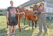 Saarte loomakasvatajad kogunevad Upale kaunislehma valima
