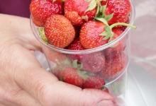 Saaremaa maasikad turul: 10 €/kg
