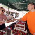Kuressaare turg on pärastlõunal rahvast täis. Käsitöö-, maasikate ja burgerimüüjad võistlevad näomaalijatega oma koha ja teenistuse eest. Rammumehedki pingutavad turuplatsil lihaseid, nagu vanadel headel aegadel, kui fotode valged servad veel pitsiliseks lõigati. Melu on turupäeva vääriline. Kui kogu kära vaibuma hakkab, ilmub turule roosa särgiga neiu ja asub oma särke ja muusikat müüma. Kaup aheldab ta turuleti taha nagu Rapunzeli vangitorni. Lähen vaatan, kas õnnestub lahti päästa juus.