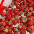Eile oli Kuressaare turult võimalik maasikaid osta vaid kahelt müüjalt. Saaremaalt Kaarma vallast pärit kohalikku maasikat saab müüja Mariuse sõnul osta veel järgmiselgi nädalal, siis on maasikad otsas.