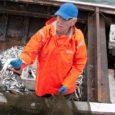 Mereteadlased arvutasid välja kahju suuruse, mille hülged tekitasid kaluritele aastal 2009. Saaremaal oli kahjusummaks 70 302 eurot, kogu Eestis 740 000 eurot, millest suurem osa Pärnumaal.