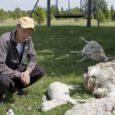 Keskkonnaameti hinnangul ei saa täiesti kindel olla, et mõne päeva eest Mustjala vallas Paatsa külas lambakarjas jõhkra tapatöö süüdlasteks on hundid.