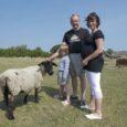 Eelkõige lambakasvatusettevõttena tuntud AS Saaremaa Ökoküla kahekordistab põhikarja ning tegeleb samal ajal jõudsalt ka taluturismiga.