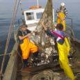 MTÜ Saarte Kalandus üldkoosoleku otsusele tuginedes külastab grupp Saaremaa kalandustegelasi oktoobris 49. korda toimuvat O Grove kalandusmessi. Saarte Kalanduse tegevjuhi Tiiu Kupu sõnul on riikliku ja riikidevahelise koostöö edendamine Euroopa […]