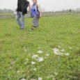 Eile teatati keskkonnaametile lammaste murdmisest Orissaare vallas Ööriku külas, kus eile öösel kaotas elu seitse lammast. Keskkonnaameti metsanduse juhtivspetsialisti Roland Rüütli sõnul on sel aastal murtud kokku 38 lammast, neist […]