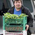 Orissaare vallas köögiviljakasvatusega tegelev Rautsi talu, kus on sel aastal tootmismahtu oluliselt suurendatud, on Ida-Saaremaa varustamise kõrval asunud üsna jõuliselt vallutama ka Kuressaare Rae kauplust.