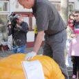 Saaremaal hiigelkõrvitsatega rekordeid püstitanud ja juba teist aastat maakonna suurima kõrvitsa kasvataja au endale saanud soomlase Juha Ollila 275-kilogrammine iludus jäi Soome kõrvitsafestivalil siiski poisikese rolli. Soomes toimunud kõrvitsafestivali võitja kaaluks saadi koguni pea uskumatud 420 kilogrammi.