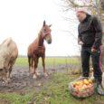 Leisi vallas Pamma külas on kõik noorte talunike loomad täie elu ja tervise juures. Kaks veterinaari lükkas ümber meedias ilmunud väited, et loomi oleks justkui väärkoheldud.
