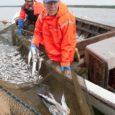 Põllumajandusministeerium kinnitas Eesti kalanduse strateegia juhtkomisjoni, kelle eestvedamisel pannakse paika Eesti kalanduse arengusuunad ja toetusrahade kasutamine aastateks 2014–2020.