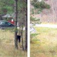 Saarte Hääle reporter sattus nädalavahetusel Mändjalas kraavi sõitnud autot pildistama minnes rünnaku ohvriks, kui auto juures askeldanud ja veljevõtmega varustatud mees teda sõimas, ähvardas, tõukas ja lõpuks lohistas.
