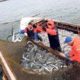 Värskest uuringust selgub, et Saare maakonna rannakaluritest on vähesed huvitatud tulevikus kalandusturismiga tegelemisest.