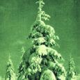 Vanemad inimesed mäletavad jõuluaega, mil lumi oli maas ja kirikusse sõideti saaniga. Nende kaugete jõulude ajal elas meie planeedil palju vähem inimesi kui täna ja hoopis vähem leidus õhku rikkuvaid tööstusettevõtteid. Mäletamist mööda vedasid maal koormat veel hobused, kes autotki polnud tee peal kohanud. Olime ise ka hingelt puhtamad, tasakaalukamad ja lapsemeelsemad, otsides lumise maa ja härmas puude kohal üleval jõulutähte. Jõuluaega peeti pühaks.