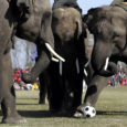 Nepaalis edendab turismi elevantide jalgpall