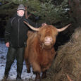 Lõmalal asuv Lehtmetsa talu asendas Kaugatoma–Lõo maastikukaitseala hooldanud lambad Šoti mägiveistega.