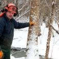 Sõrve poolsaarel Läbara külas teest paarikümne meetri kaugusel metsatukas põriseb Husqvarna kord pöördeid kõrgemas helistikus üles kruvides, seejärel madala jorinaga maha võttes. Saemees on ettevõtja Sulev Kallas, OÜ Puu & Muu omanik.