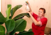 Eksootiliste taimede kasvataja sai kirjastuslepingu