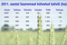Saaremaal suurenes piimatoodang, kuid vähenes taliviljade külvipind