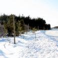 Reedel keskkonnaametis toimunud pärandkoosluse ümarlaual tegi Mändjala elanik Andres Toom avaliku pöördumise, milles ta kritiseeris keskkonnaameti plaani alustada Loode tammiku piirkonnas lihaveiste karjatamist.