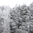 Meteoroloogia ja hüdroloogia instituudi andmetel tuleb jõululaupäeval, 24. detsembril väga külm ja tuuline ilm ning nii öösel kui ka päeval võib õhutemperatuur olla alla –20 kraadi. Jõululaupäeva öösel tuleb vähese […]