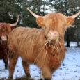 Eesti lihaveisekasvatajate selts soovib kohtuda põllumajandusministriga, et arutada Eesti lihaveisekasvatuse hetkeolukorra, tulevikuprognooside ja probleemide üle.