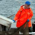 Keskkonnaministeeriumi eelmisest sügisest kehtestatud hinnaskaala võib ebaseaduslikult püügilt tabatud kalamehest üsnagi lihtsalt kriminaalkurjategija teha, kirjutab ajaleht Postimees.