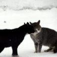 Saaremaal käies põikasin läbi ka kohalikust lemmikloomade turvakodust. Olgu kohe mainitud, et hädiseks turvakoduks seda nüüd küll nimetada ei saa. Tegemist on pesuehtsa varjupaigaga, mis püsib vaid mõne inimese loomaarmastusel […]