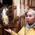 Neljapäeva hommikul käis Eesti hobusekasvatajate seltsi esindaja Orissaare vallas Maasi külas asuvate hobuste elutingimustega tutvumas ning jäi nähtud pildiga igati rahule. Loomakaitsjate hinnangul ei pruukinud aga oma seltsi liiget kontrollinud Aarne Lember oma hinnangutes objektiivne olla.