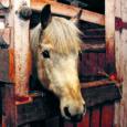 Saarte Hääl on mitu korda kirjutanud Orissaare vallas Maasi külas Marika Igele kuuluvate hobuste halvast seisukorrast. Kuna olukorrast teavitanud inimeste juttu võeti kui asjatundmatut pealekaebamist, otsustasid nn pealekaebajad oma nimed avalikustada. Selgus, et tegemist on aastaid hobustega tegelenud inimestega.