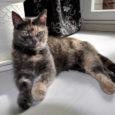 Kass Pipi tegi veebruarikuu alguses Virtsu sadamas autost vehkat ja pererahvas teda enam üles ei leidnudki. Kaks kuud hiljem ilmus Pipi välja hoopis Kuressaares ja on nüüd tänu headele inimestele taas oma pere juures Tallinnas tagasi.