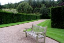 Millist hekki aeda istutada?