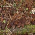Kevadine aeg toob pommigrupile kõvasti tööd. Lisaks tihedale nädalavahetusele käisid Lääne-Eesti pommigrupi demineerijad ka esmaspäeval mitmes Saaremaa külas lõhkekehi hävitamas.