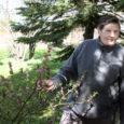 Ülo Roosi rajatud dendraariumis Kuressaare Tuule tänava merepoolses küljes on praegu üks pilkupüüdvamaid taimi õitsev näsiniin.