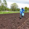 Kartuliteadlase Luule Tartlani hinnangul on see nädal kõige soodsam aeg kartuli mahapanekuks. Saaremaal on paljudel tuhlis juba maas.
