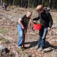 Riigimetsa uuendamise käigus paneb RMK sel aastal Saaremaal kasvama 495 000 puud, millest enamik on männid. Lisaks 390 000 männile pannakse ka kasvama ka 70 000 kuuske ja 35 000 […]